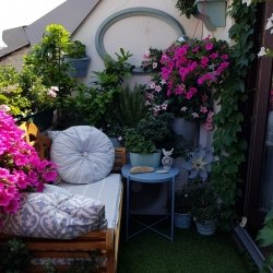 Klimaschutz uin kleinen Schritten - Urban Gardening Vienna