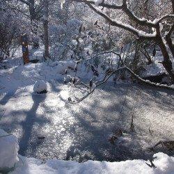 Winterzeit am Gartenteich