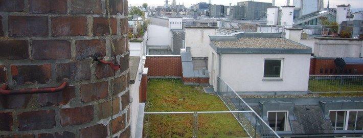 Dachabdichtung und Entwässerung durch Bauträger, danach von Ecowork extensiv begrünt