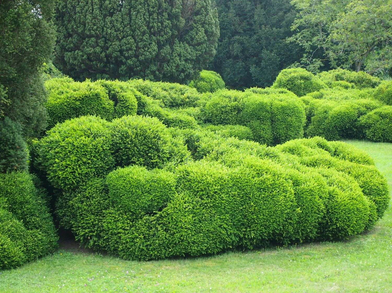 Bekämpfung des Buchsbaumzünslers - Pflegepakete für Private
