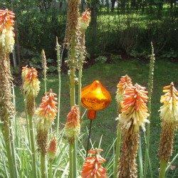 Schmuckkugeln im Country Garten