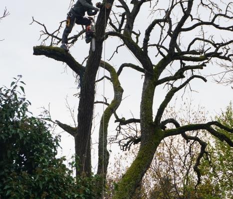 Bäume inTeilen Abtragen