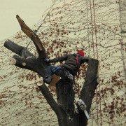 Professionelle Klettertechnik mit Schutzausrüstung und Kettensägenkenntnissen
