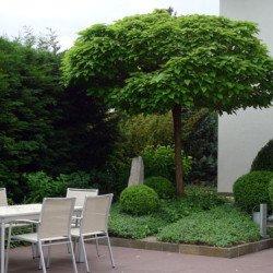 Garten zum passenden Niedrigenergiehaus