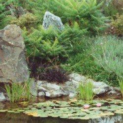 Wasserfläche strukturiert mit Steinen und Wasserpflanzen