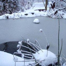 Schwimteich oder Feuchtraumbiotop im Winter