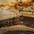 Schadensbild nach Wasserschaden über Kellergewölbe