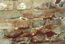 Pilzmyzel durchwdringt Mörtelfugen
