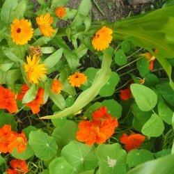 Pflanzengemeinschaften zur Schädlingsabwehr Nützen