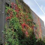 Vertikalbegrünung Klimaschutz