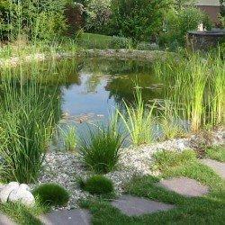 Schwimmteiche bei ausreichender Uferzone ohne Technik