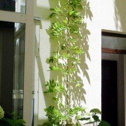 Fassadengestaltung mit Bewuchs auf Spanndrähten